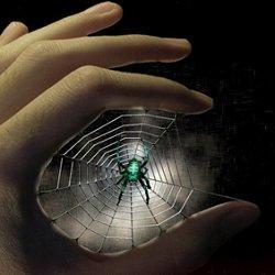 гадание по паукам фото