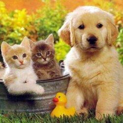 домашние животные фото